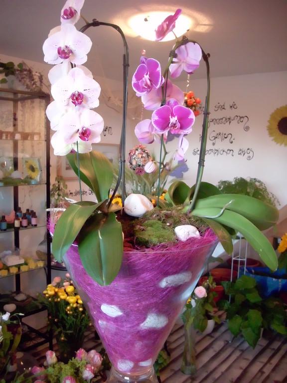Für einen Geburtstag in einer Glaskelchvase mit Orchideen ausgarniert