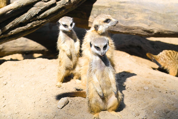 Tierpark Gotha