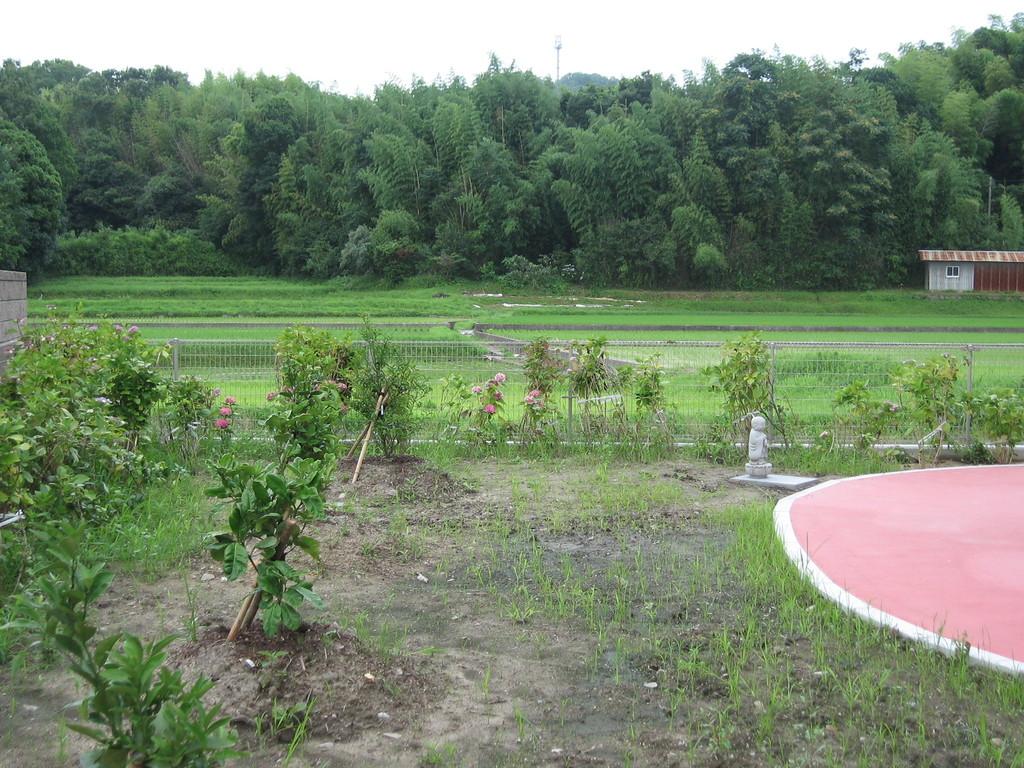 サンウィングから見える緑豊かな田園、林2