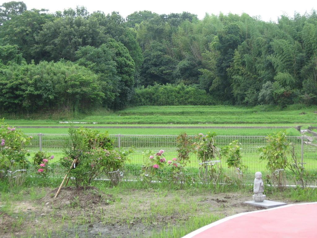 サンウィングから見える緑豊かな田園、林1