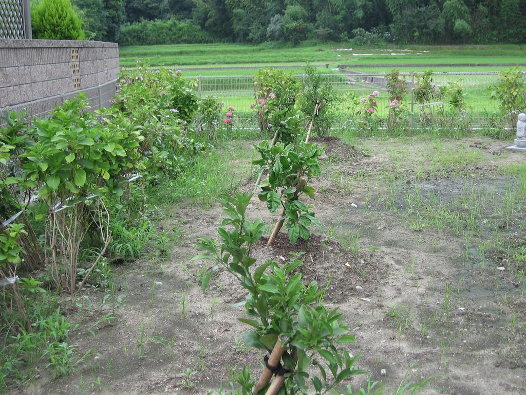 豊かに育て!果樹園