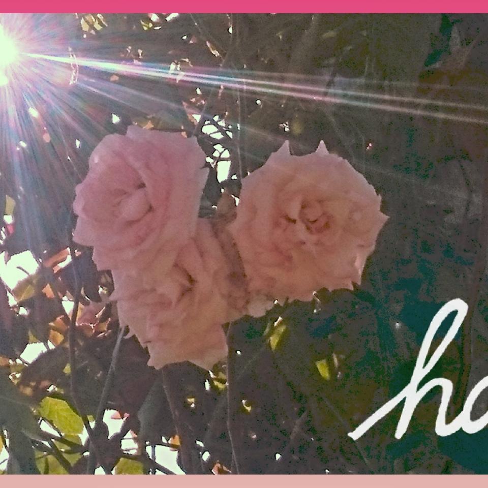 公園での昼下がり、バラの花を写真撮影しました。光が降り注いでとてもきれいでした。✨✨✨