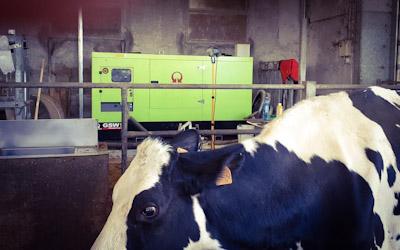 Un generatore di corrente per il fabbisogno di un allevamento bovino