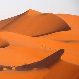 circuit guidé dunes de merzouga