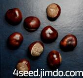 семена каштана конского купить продажа