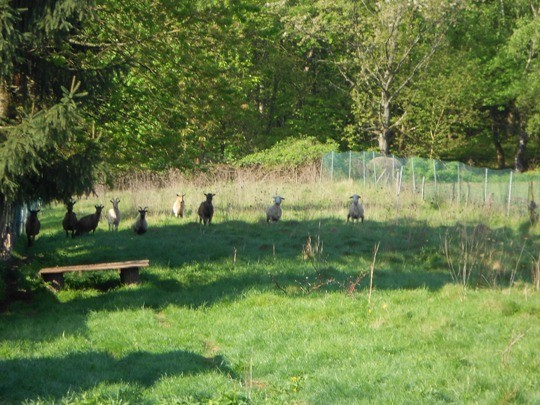Die Ziegen und Schafe freuen sich, dass sie ab und zu auch die Nachbarweide nutzen dürfen.