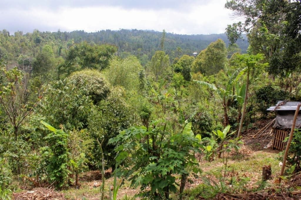 Land on offer for sale by owners direct. North Bali. Buleleng land for sale by owner