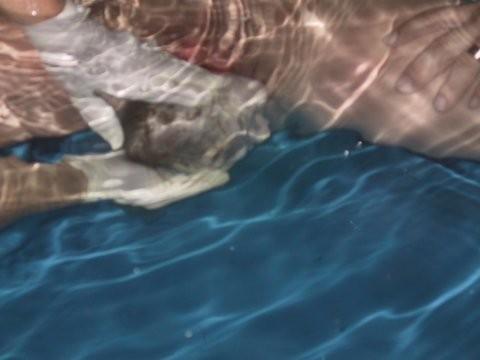 Geburt unter Wasser
