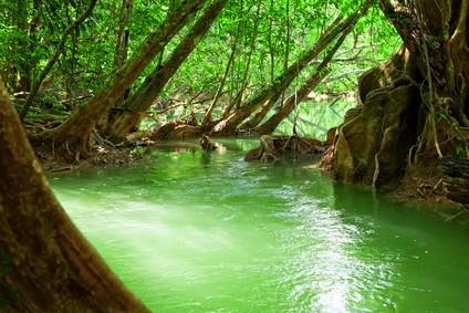 Regenwald während der Regenzeit in Umphang