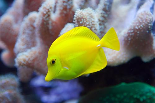Unterwasserwelt in Thailand