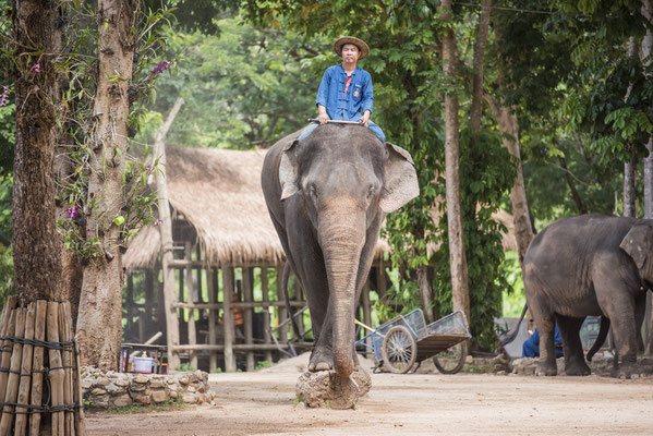Elefanten in Lampang