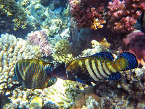 """""""Ein Fisch in tropischen Gewässern"""""""