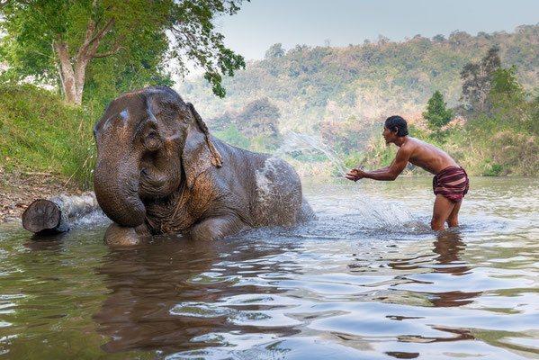 Ein Elefant beim baden mit seinem Mahout