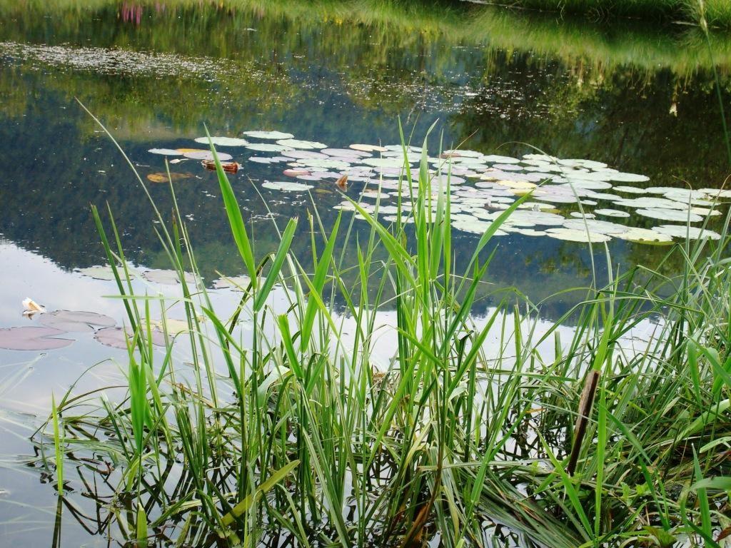 Teich im Naturjuvel Schwemmgebiet im Ortsteil Schwaigs