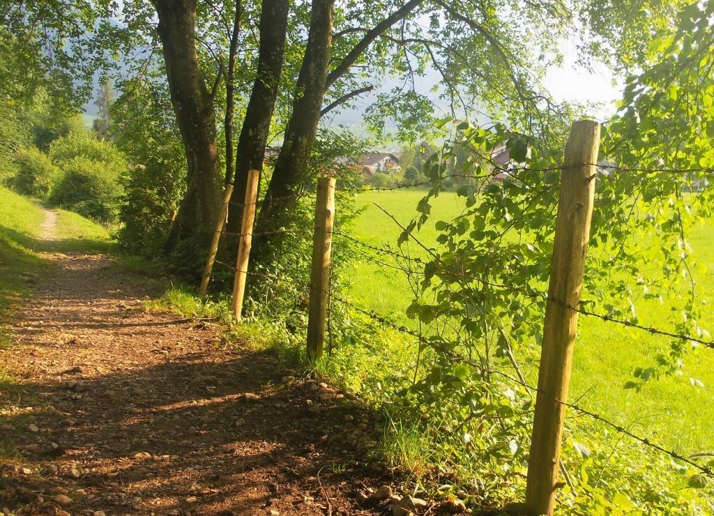 Klassischer Wanderweg in Walchsee