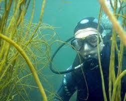Plongée sous-marine - 15 km