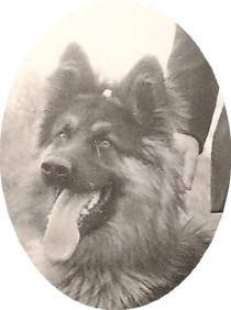 LUDO, mon 1er berger Allemand LOF né en 1975