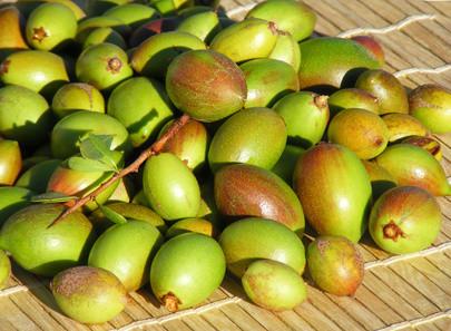 ARGAN FRUITS
