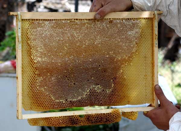 Euphorbia Resinifera Honey