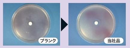大腸菌の抗菌試験結果