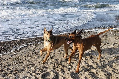 mit Freundin Josie an der Ostsee