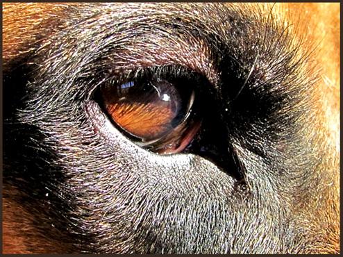 wachsames Auge