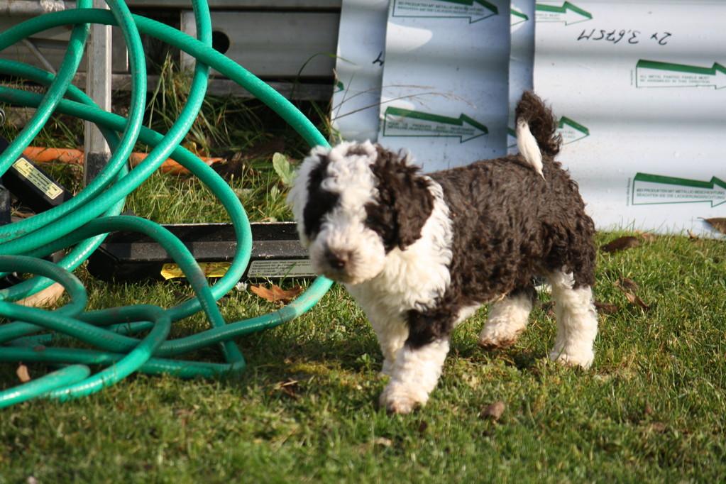 Bruno erkundet den Garten!
