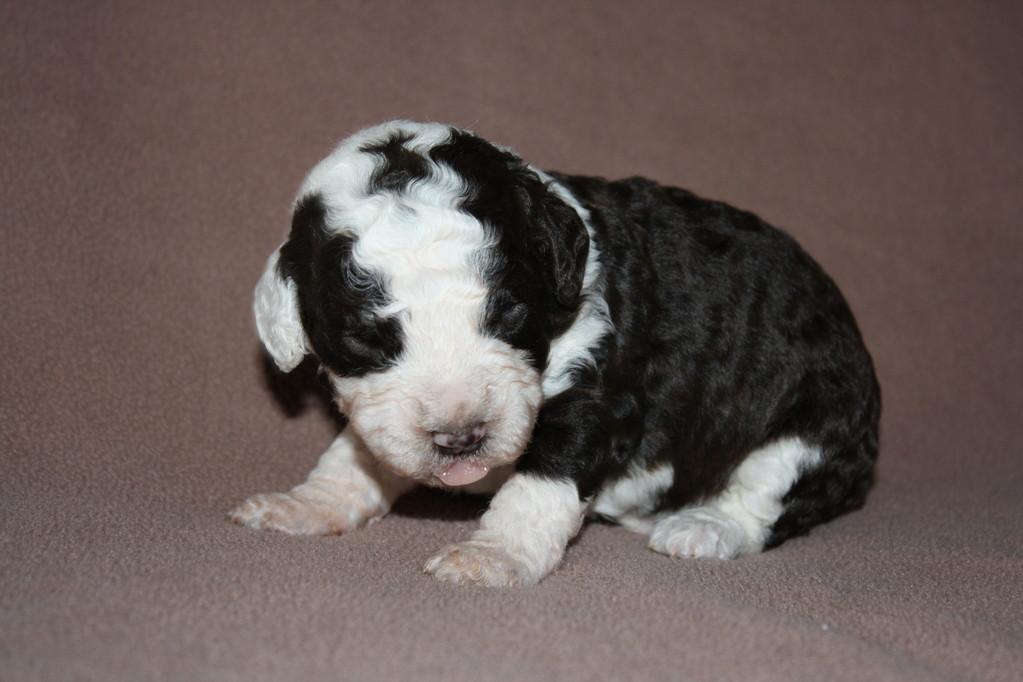Er hat eine Schoko und eine Milch-Seite, einfach süß, mit 2 Wochen!!
