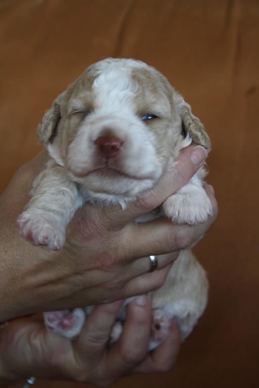2 Wochen alt!