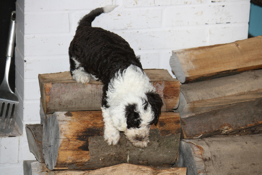 ...ohne zu zögern erklimmt Bruno den Holzstapel