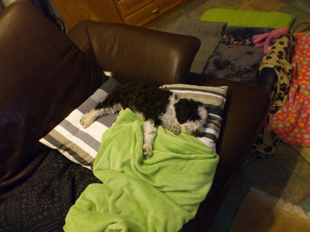 ......und schon die Couch erobert! Achhhhhhhh Estrella, da würd ich auch gern liegen!!