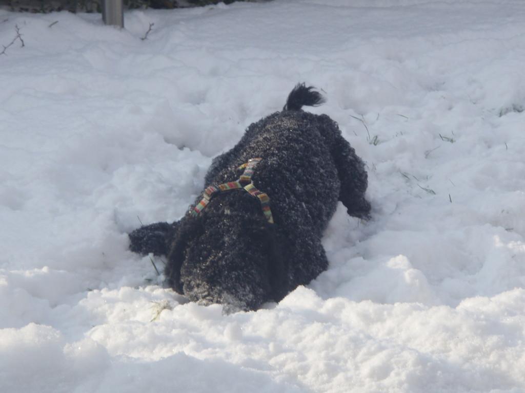 .......liebt den Schnee, wie Mama Berra!