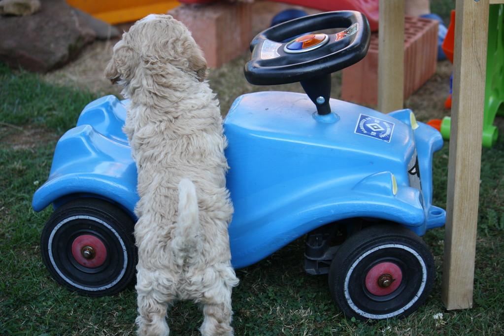 ......wir kennen Kinderfahrzeuge und ihre Fahrer......