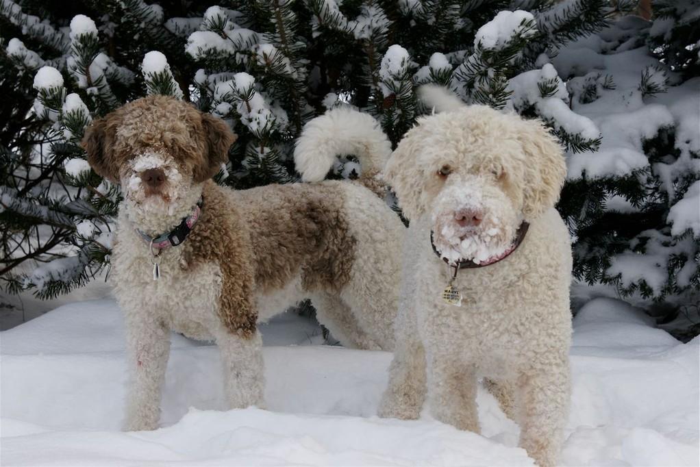 Zorrazo Hugh me (Chica) und Canis Marinus Amarillo (Maryl)!