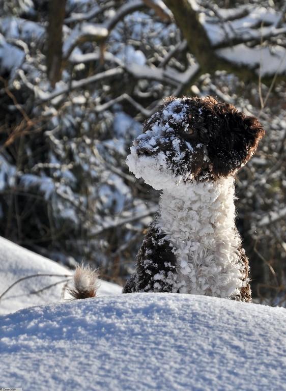 Amira´s 1. Schnee