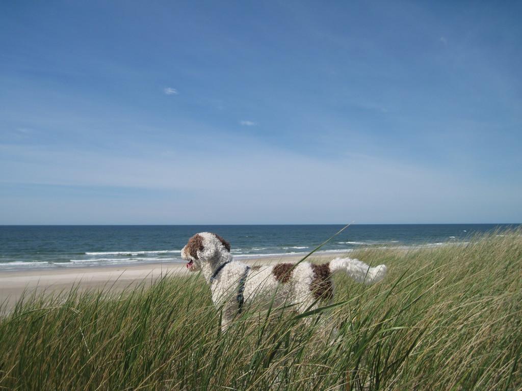 ..........ahhhhhhhh so sieht ein Urlaub mit Hund aus! Wunderschööööööööööööööööööön!
