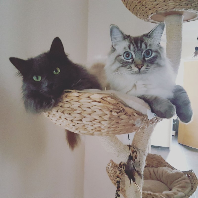 Olaf mit Katzendame Rubin