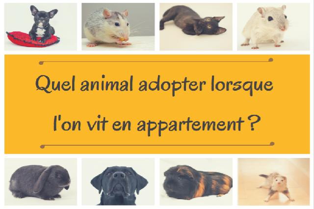 Quel Animal Adopter Lorsque L On Vit En Appartement Site De Miminesetpattounes
