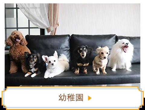 犬の幼稚園02