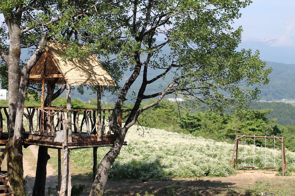 カモミール畑にツリーハウスができました