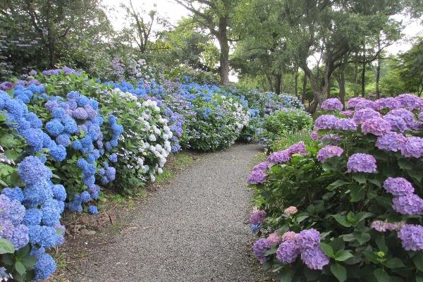 【お知らせ】カラダほぐしとアジサイ散策 ガーデンYOGAリラックス