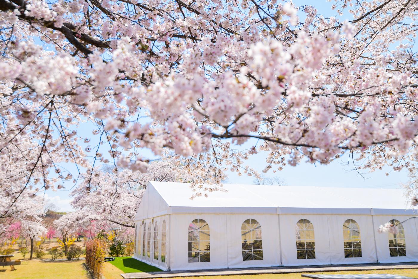 【お知らせ】お花見弁当つき ガーデンYOGAリラックス 4月18日(日)