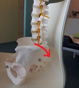背骨が真っすぐになる原因