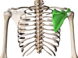 ストレートネックの骨
