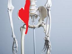 腰痛の原因の筋肉