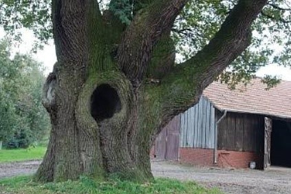Alte Bäume mit Höhlen sind schützenswert. Foto: Sarina Pils