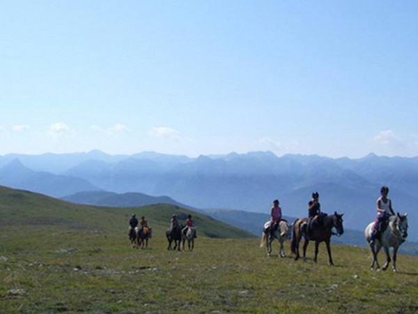 ©Ferme équestre cheval cathare