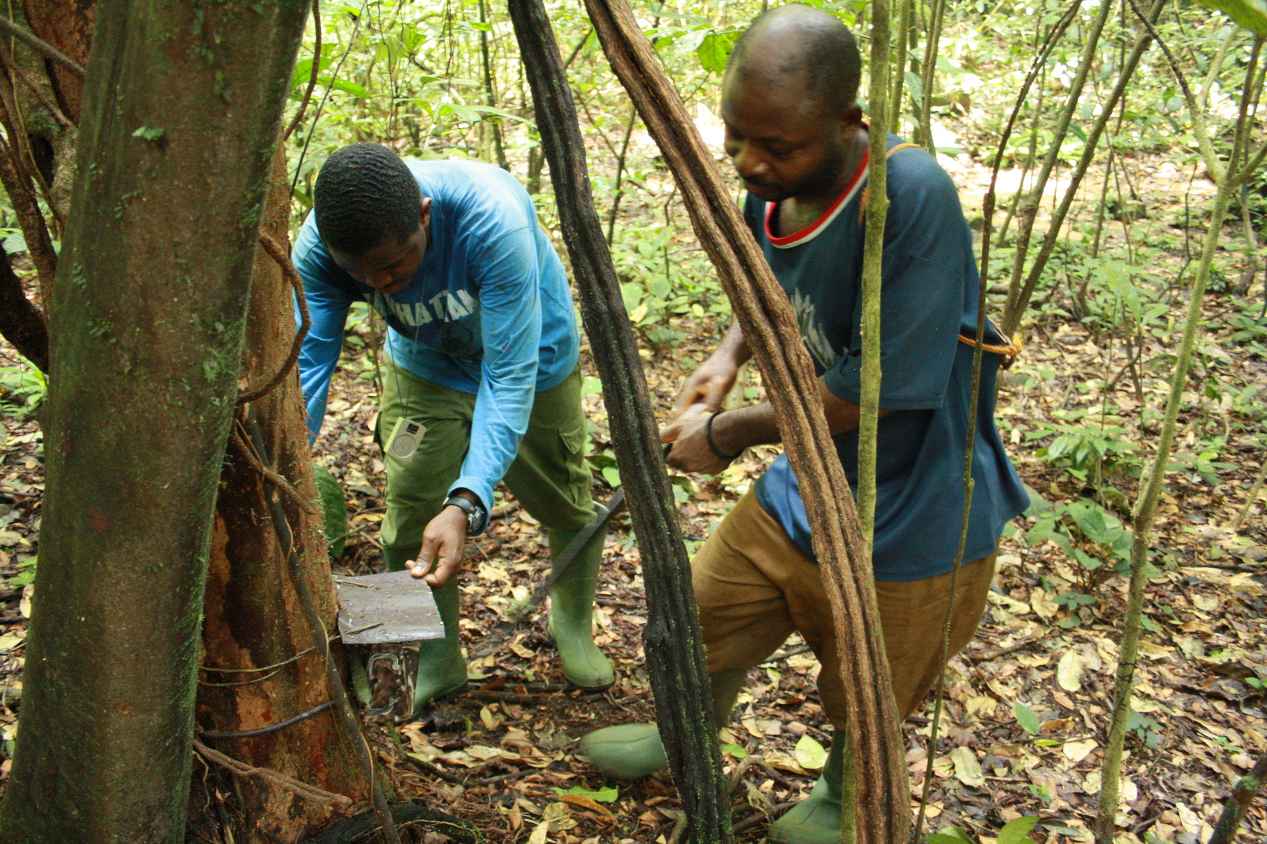 Setting up camera traps
