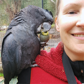 Spending time with a sweet one at Kaarakin Black Cockatoo Conservation Center