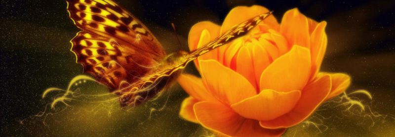 A harmonious image of a Butterfly on an available orange flower.